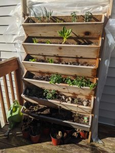 Picture of a vertical herb garden hard built by Richard Bobholz out of cedar plants. It contains, from top left to bottom right, green onions, sage, romaine lettuce, sweet mint, and Italian oregano.