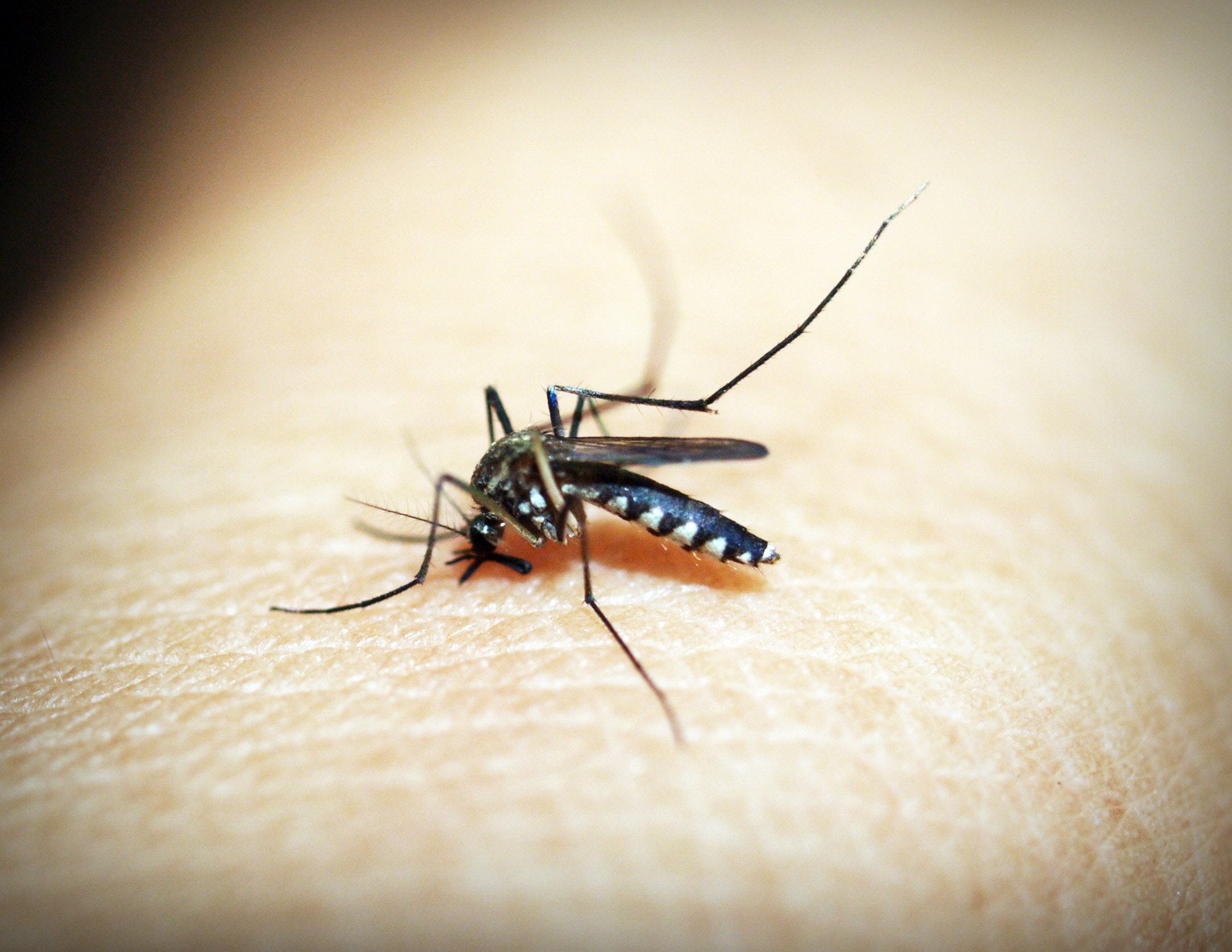 How to Get Rid of Mosquitos - Paint Covered Overalls - Durham North Carolina