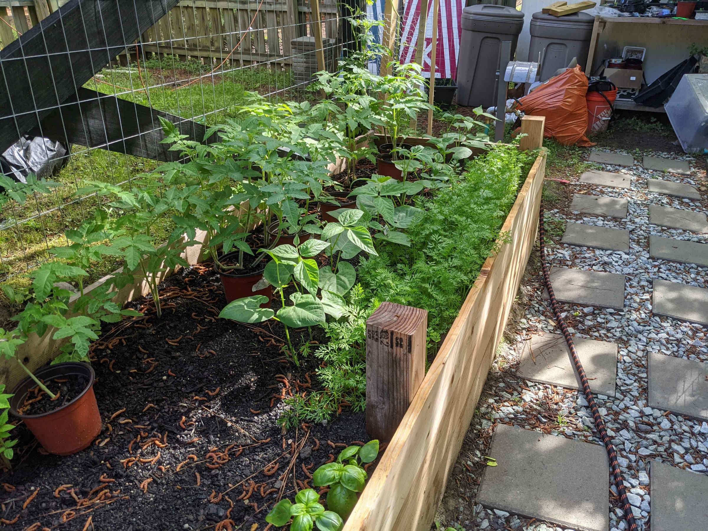 What is Companion Planting - Paint Covered Overalls - Durham North Carolina